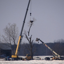 Haldimand-Norfolk - Removal of Eagles Nest